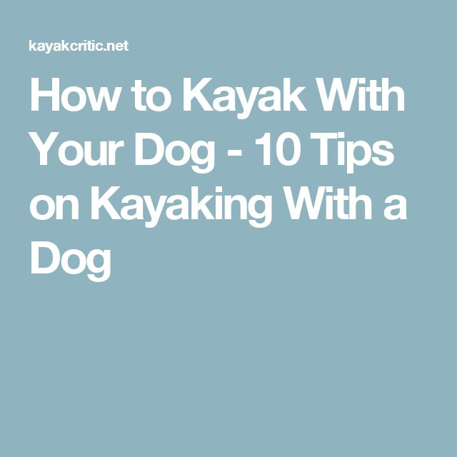 How to Kayak With Your Dog - 10 Tips on Kayaking With a Dog