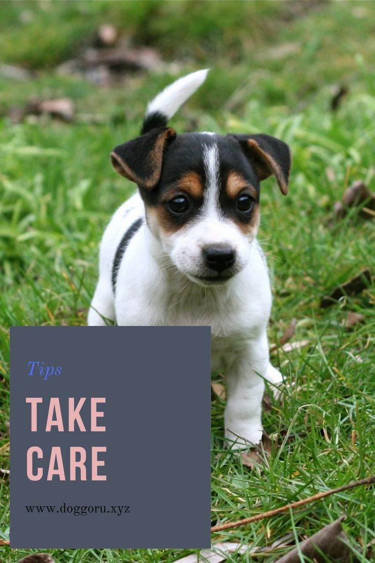 How To Take Care Of The Baby Dog Puppies Baby Dogs Dogs Puppies