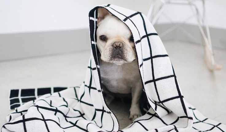 Modern, Scandinavian-inspired dog accessories and apparel from Pipolli.