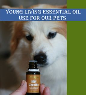 Essential Oil Use For Pets