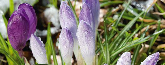 A algunos les gusta el frío - germinadores fríos - Conocimientos Expertos, Otoño, Invierno, Flores, Jardín De Flores, Sem...