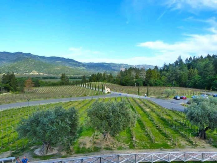 California: 10 melhores vinícolas de Napa Valley para visitar