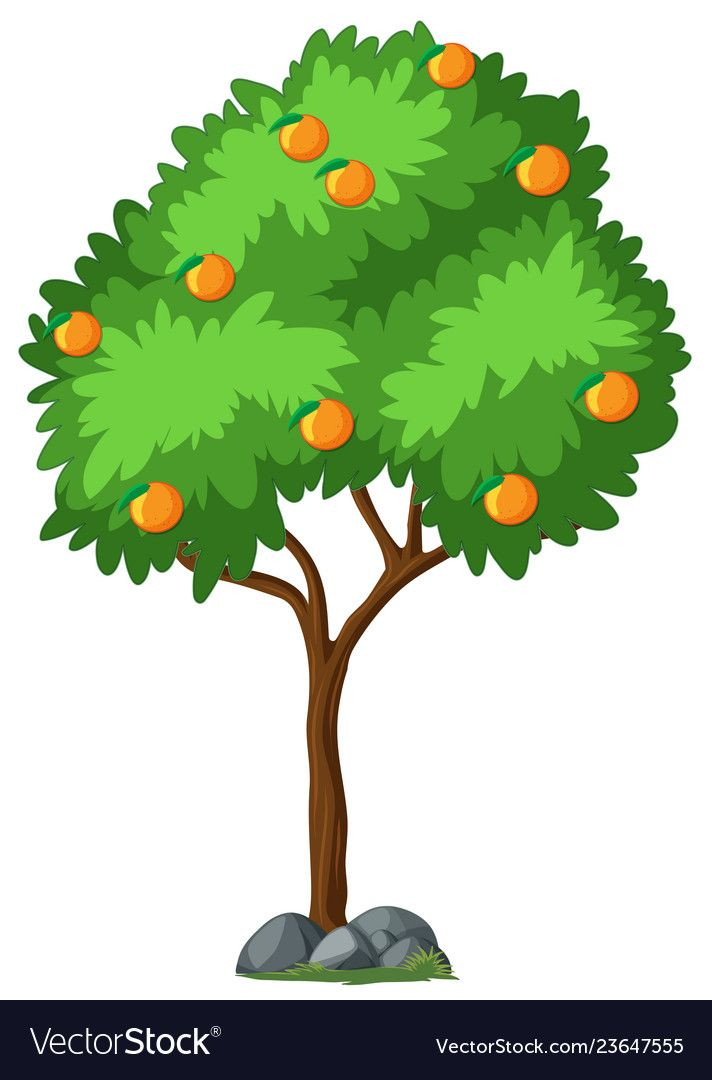 Isolated Orange Tree On White Background Illustration Download A Free Preview Or High Quality Adobe Illustrator Ai Eps Pdf And Orange Tree Plant Clips Tree