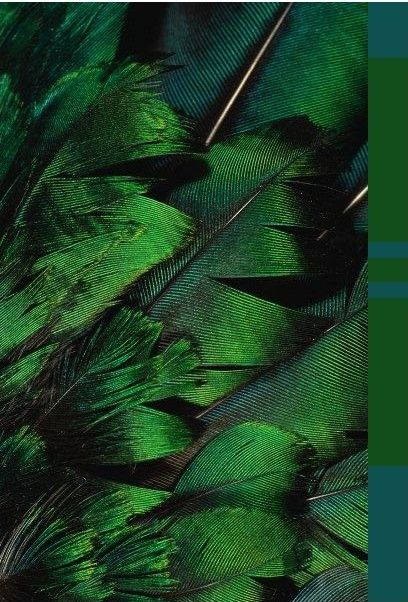 Emerald Green Feathers