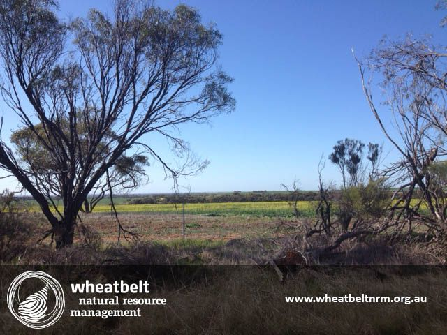 Canola is already flowering in some parts of the Wheatbelt! Have you seen it out near you? @Wheatbeltnrm