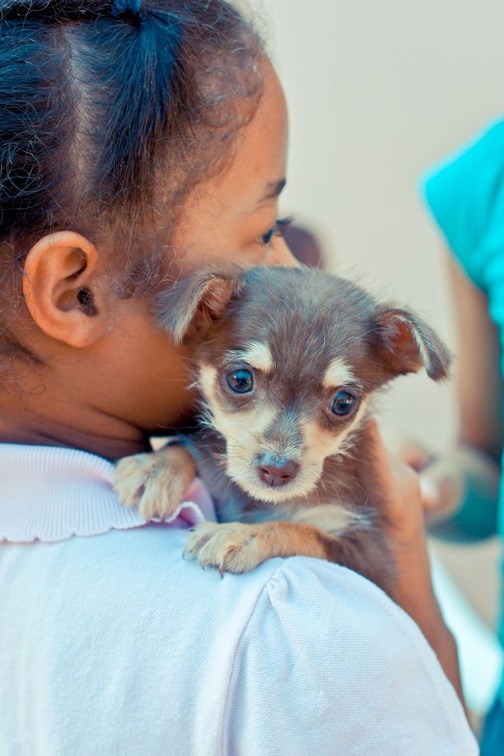 79 best dogs and puppies world vets images on pinterest puppies