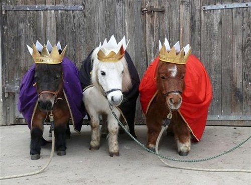 Best 25+ Shetland ponies ideas on Pinterest | Mini shetland pony ...