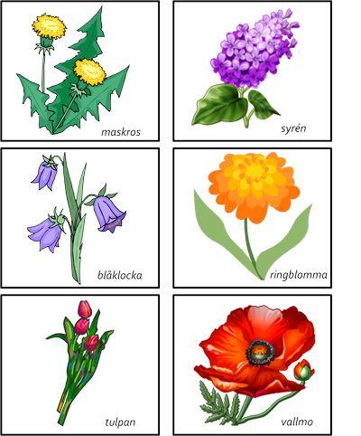 Blommemory -beställning