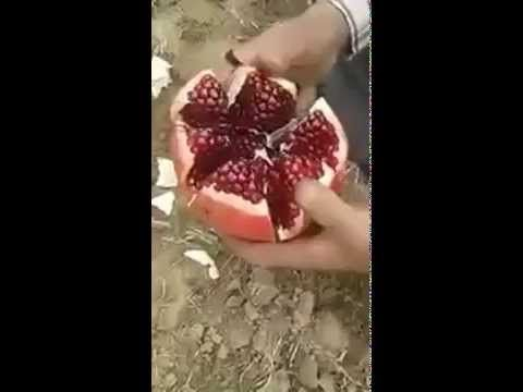 How To Deseed a Pomegranate - THE best method EVER!!