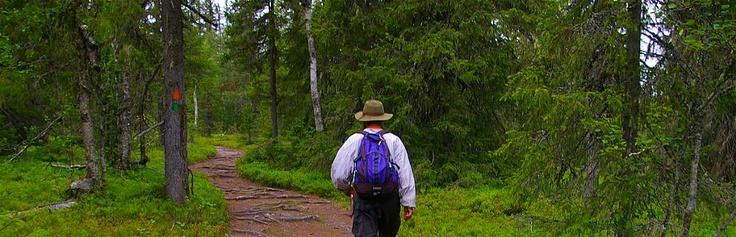 Der Rokua Geopark ist der nördlichste Geopark der Welt und ein finnisches eiszeitliches Naturerbe.