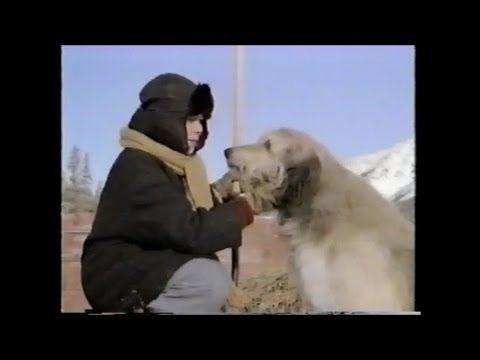 Stone Fox (1987) (TV Movie) Buddy Ebsen, Joey Cramer - YouTube