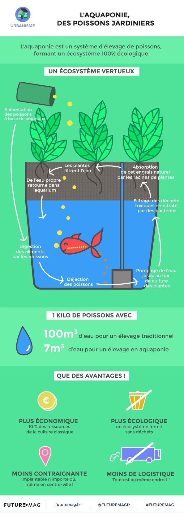 L'aquaponie, des poissons jardiniers