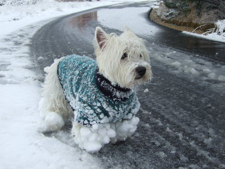 aww this puppy has snow ninjas all over him. Reminds me of my dog in the winter after playing in the snow.