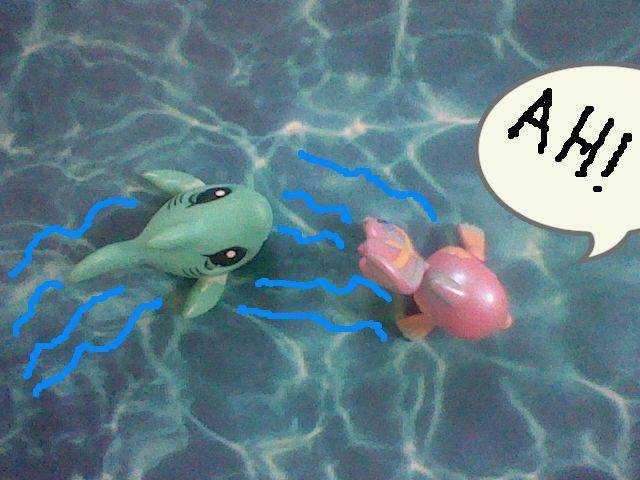 RUN SHINY RUN.................{the shark is chasing shiny}