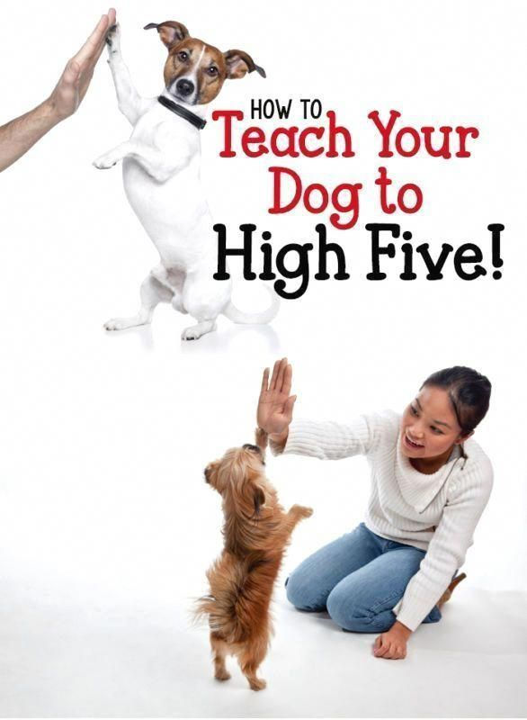 Strategies Information And Ideas For Dog Training Tips A Happy