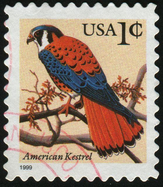 USA 1999 - El Cernícalo Americano, Halconcito Colorado o Cuyaya es una especie de ave falconiforme de la familia Falconidae que habita en gran parte de América, desde Canadá hasta Tierra del Fuego. Es un ave muy utilizada en la cetrería.