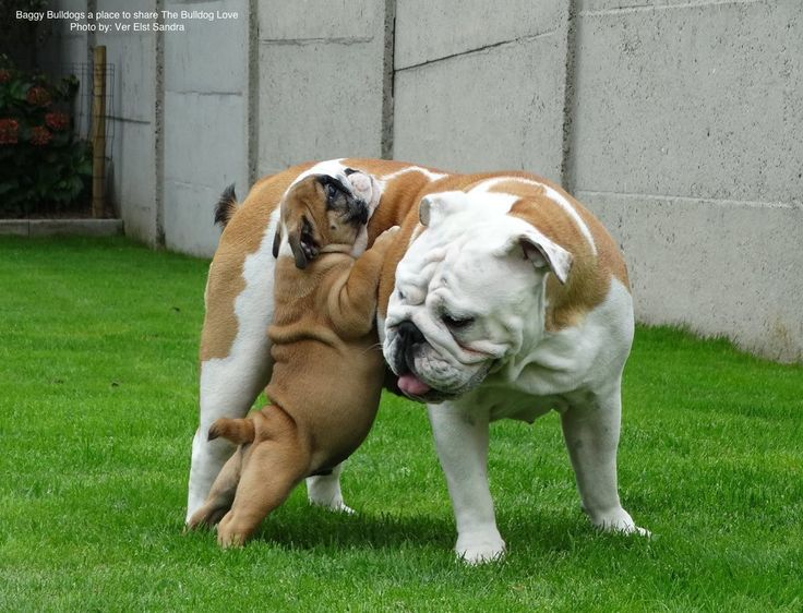 """Dad, I am tired of walking, bend down, so I can get on """"PLEASE""""."""