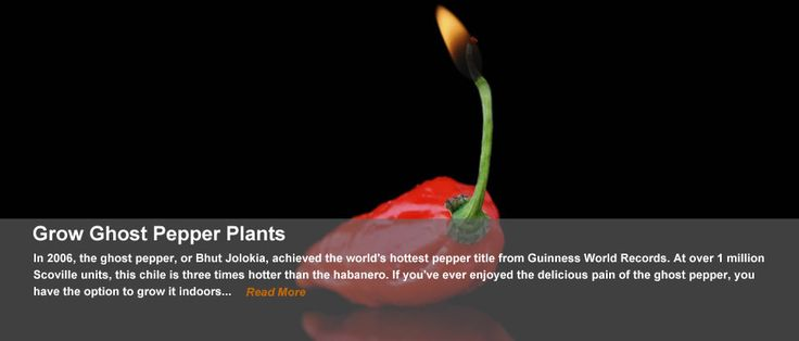 How to grow Ghost peppers
