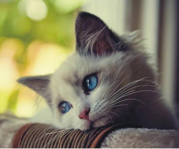Kedileri Tanıyalım - KizlarSoruyor