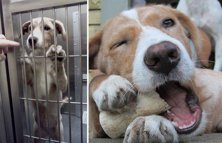ReproduçãoBoredPanda Adocao Pinterest Adoption Dog Nose - Animal shelter makes hilarious low budget cat commercial that ends up going viral