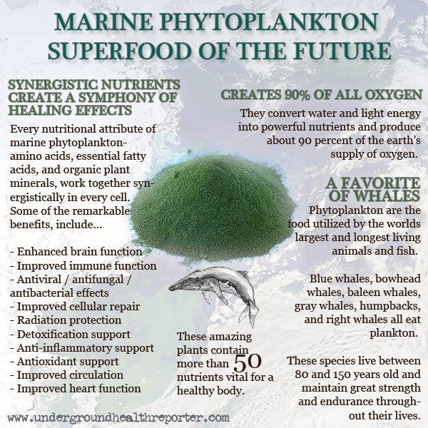1000+ images about MARINE PLANKTON on Pinterest