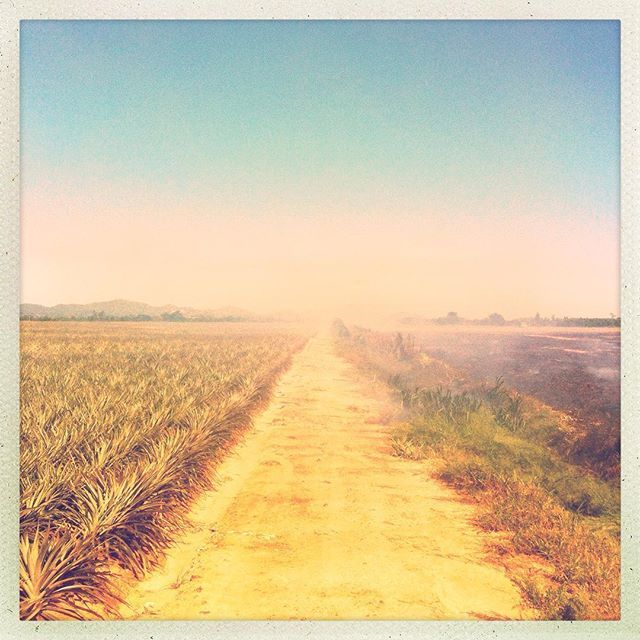 On the #road of the #pineapple fields in #pranburi 🍍🍍🍍 #thailand #hipstamatic #amazingthailand #travelblogger #travelphotography #instatravel #instanature #instatraveling #instatravelling #travel #trip #pineapplefields #instathailand #worldtour #prachuapkirikhan #pkk #huahin #paknampran 📷 taken by @just_alvaro