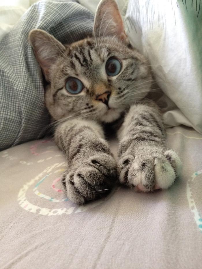 Best 25 Grey Tabby Kittens Ideas On Pinterest Grey