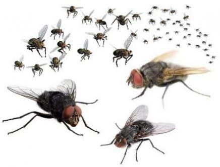 34 Best Home And Garden Pests Images On Pinterest | Garden Pests