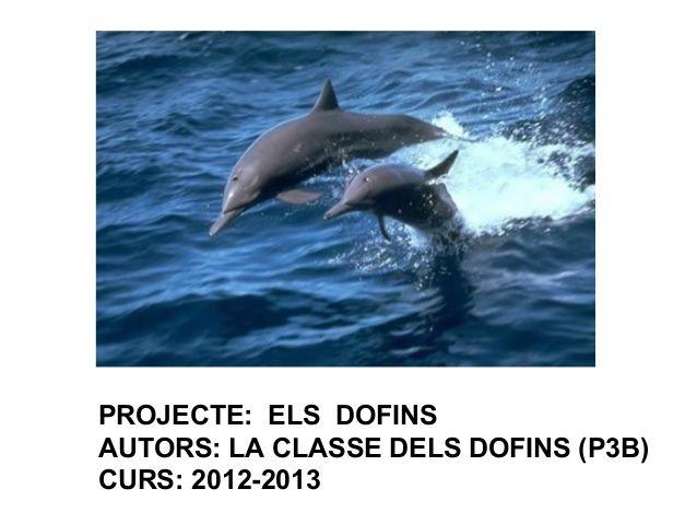 DOFINS (P3)