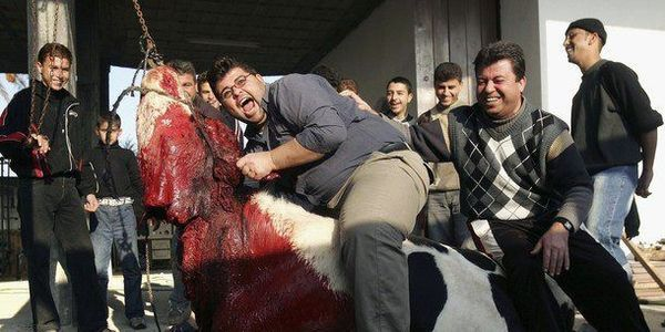 This is Your hamburger, and the EVIL that creates it. By signing this Petition you will help end the Hundreds of Corporate Slaughter Houses around the world, and those funds will be redirected to Humane slaughter houses that treat the Animals ethically and with the respect they deserve. SIGN:http://www.thepetitionsite.com/150/427/372/stopcorruptedslaughterhouses/?cid=FB_TAF I signed