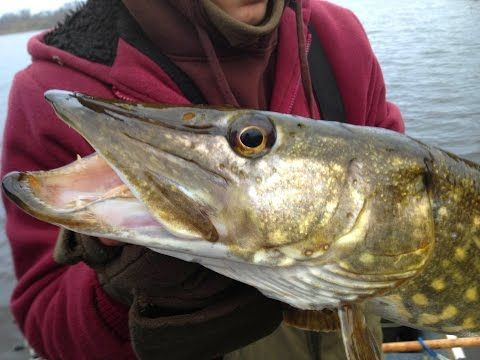 Pike Fishing With Deadbaits - Rigs, Tips & Tactics - (More info on: http://1-W-W.COM/fishing/pike-fishing-with-deadbaits-rigs-tips-tactics/)