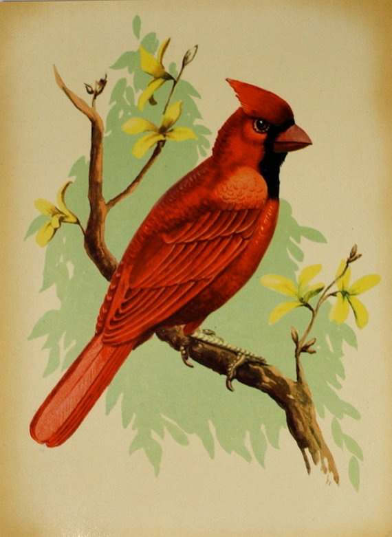 Vintage Cardinal 77
