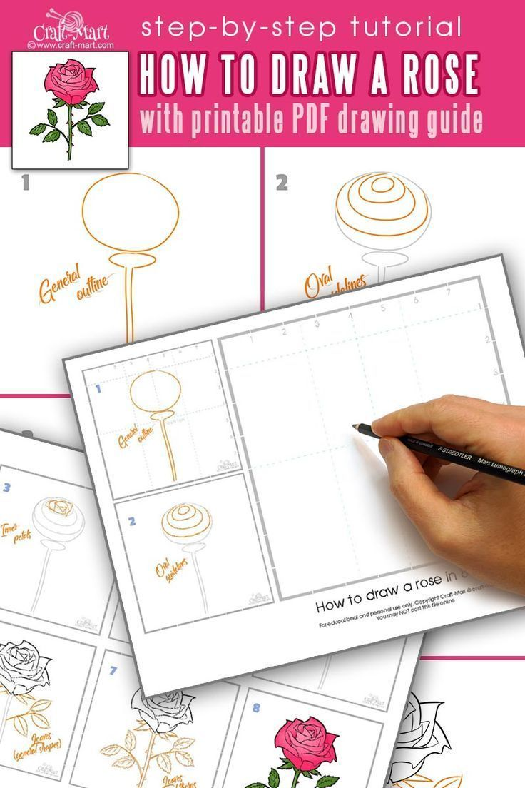 Fashion nova rose step by step flower drawing beginner