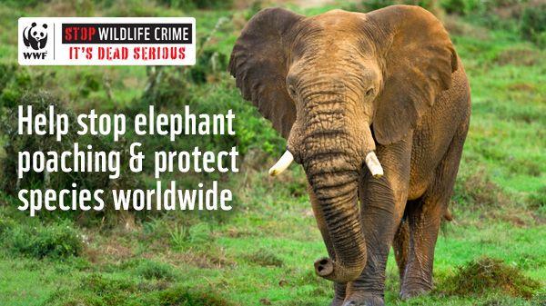 Help stop elephant poaching & protect species worldwide