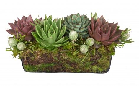 Eco friendly convention display, moss, and succulents. http://www.jaysonhome.com