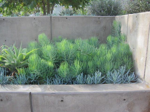 landscaping against a wall - Google Search