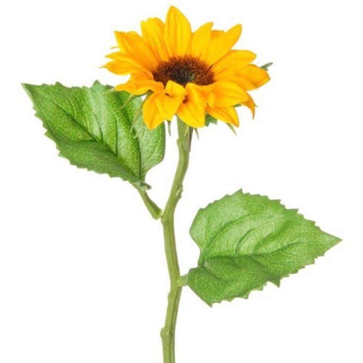 This premium artificial golden yellow and cheerful sunflower spray, boasts 1 brilliant bloom. Ideal for adding to arrangements and bouquets - 35cm tall.*Plesse allow 7 days to be packed and shipped as these are a special order