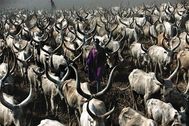 As fotógrafas Carol Beckwith e Angela Fisher possuem uma vivência de mais de 30 anos do registro de cerimônias, rituais e cotidiano de povos tribais africanos, o que fez com que suas imagens refletissem uma longa e profunda relação de respeito com os costumes e as pessoas dessas tribos, especialmente a Dinkas, no Sudão. Contemplar essas imagens é como se abríssemos uma janela ao passado, observando traços de uma cultura rica e fascinante de um povo lindo, que preza pelo costume de seus…