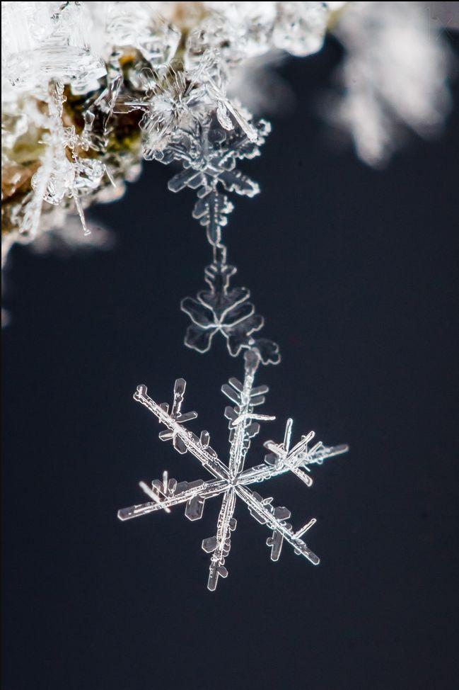 Cadena de copos de nieve. Macrotofo: Sami Ritoniemi.