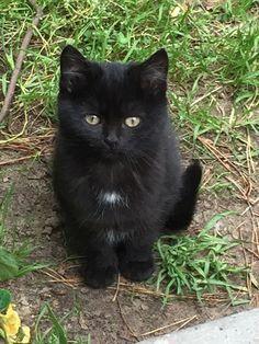 Untitled cats cat pet cute – stubentiger
