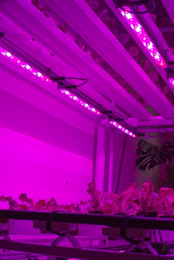 farming vertical lights led