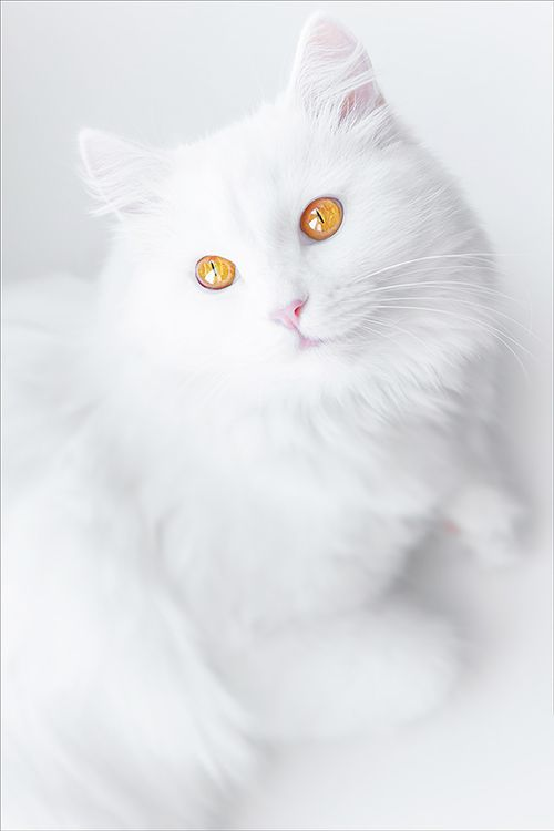Golden eyes, posted by outdoors beneath the moon and stars via imgfave.com