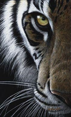 Los tigres son oportunistas y no desprecian presas de pequeño tamaño, como monos, pavos reales, liebres e incluso peces pues este gatito no le tiene miedo al agua.