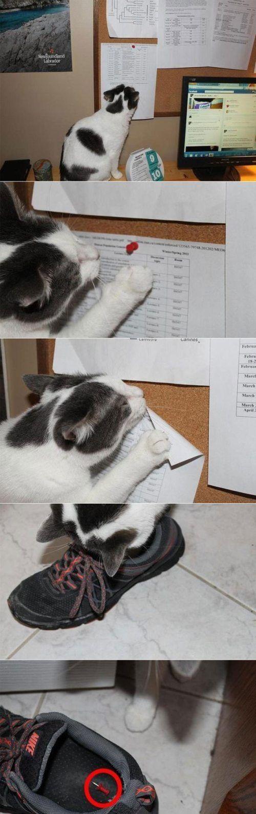 Los gatos son mascotas excepcionales y tan inteligentes que a veces nos hacen pensar que están planeando algo en contra nuestra. Jajaja Aunque definitivamente estos gatos algo planean. Lugar preferente para espiar todos tus movimientos. Una señal bastante clara. Sabe que el piso del baño se puede poner muy resbaloso. Una sonrisa así no es […]