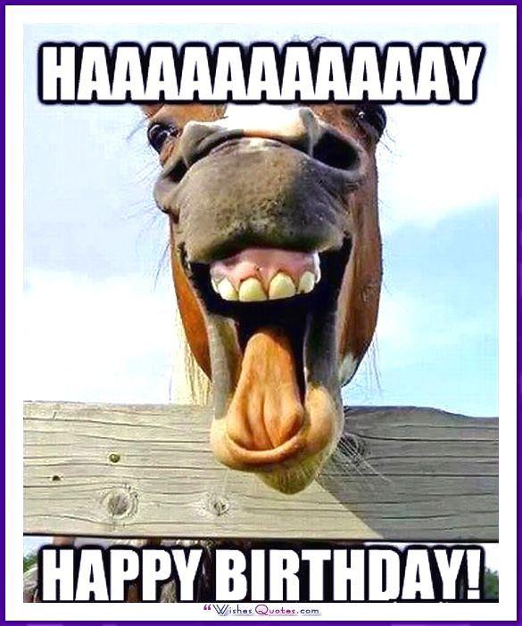 Alles Gute Zum Geburtstag Memes Mit Lustigen Katzen Hunden Und