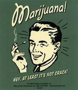 3131119149_3620104931_marijuana_xlarge_xlarge.jpeg (262×300)