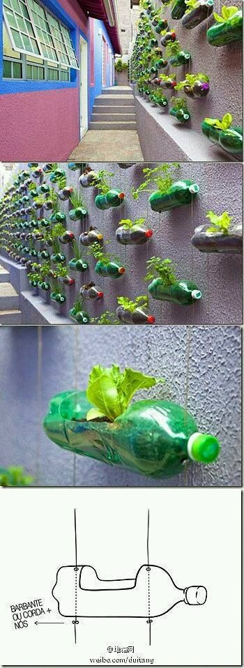 plant in a bottle
