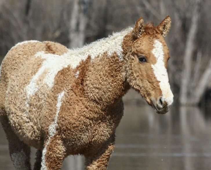 A curly-haired horse