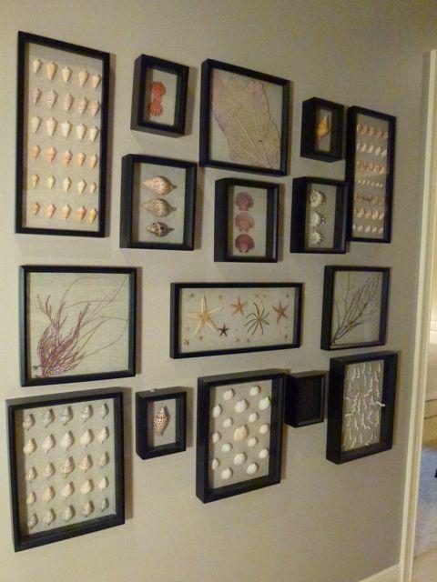 Hallway-framed-seashells-dmm.jpg 480×640 pixels