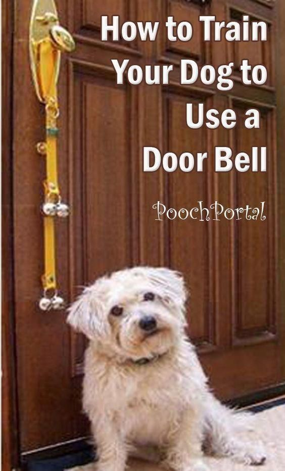 Strategies And Guide For Dog Training Tips A Number Of People
